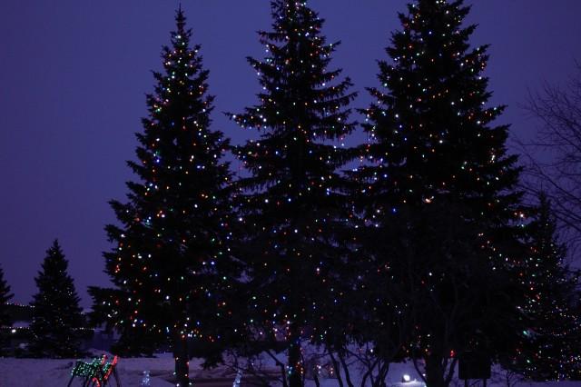 O Christmas Tree Still