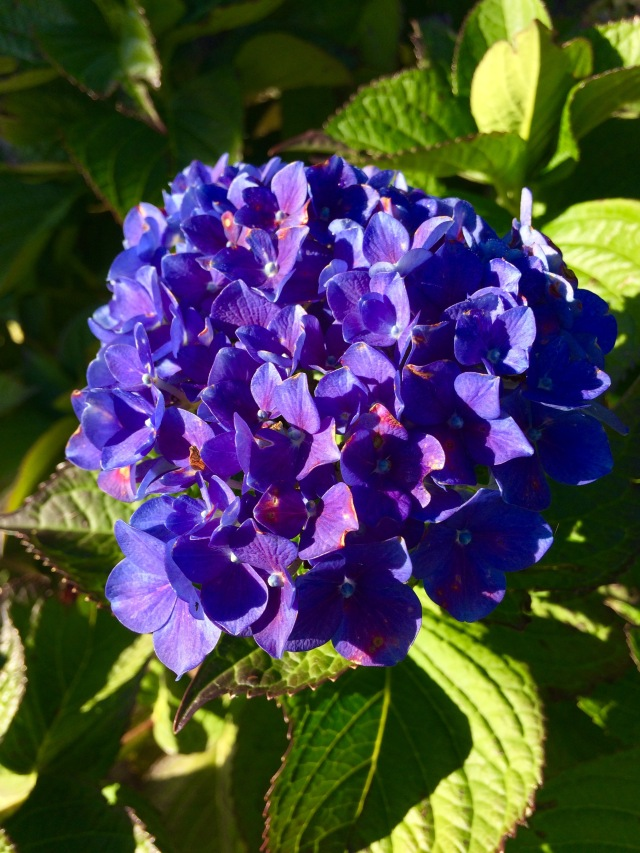 purplefleur